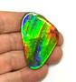 55 x 35 Three Color Natural Free Form Ammolite Gemstone GXM853