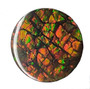 14x14 Ammolite Canada's Opal Double Sided Round Shape Triplet 2 Color Green & Gold