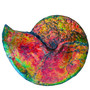 C/S - Beautiful Bright Mined Ammonite Bright Reds, Oranges, Golds, Greens, and Blues