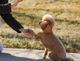 5 easy tricks to teach your dog whilst in self isolation