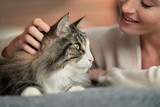 The truth about cat allergens