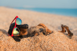 Keeping your dog safe in the sun