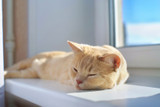 Is your cat overheating?