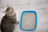 5 reasons your cat is avoiding their litter box