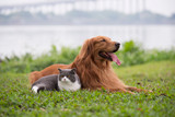 Top 5 tips for protecting your pet against fleas