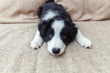 Preparing for your new puppy: A complete checklist