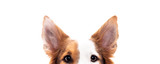 Do I really need to clean my Dog's ears? Groomer explains why it's so important.