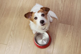 What are the benefits of mixed feeding for your dog?
