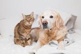 The secret to stress free pets