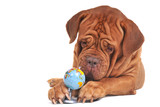 Become an environmentally responsible pet parent with these simple lifestyle changes