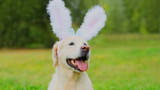 How to have an Easter scavenger hunt for your dog in 4 easy steps.