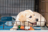How to crate train your puppy: step-by-step guide
