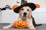 Keep your pets safe on Howl-o-ween!