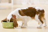 Wet and dry feeding your dog
