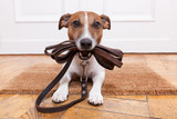 Trainer explains: Why NOW is the perfect time to train your dog.