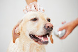 Double coated dogs: Why they need to be groomed differently