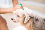 How flea treatments work