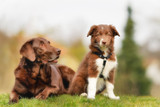 Different dogs need different shampoos: How to pick the right one
