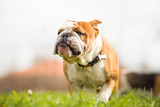 7 common reasons your pet is gaining weight