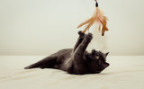 Best ways to play with your cat
