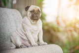 Obesity in pets: What part does nutrition play?