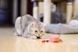 Interactive play time with your cat