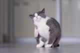 Bravecto: 9 signs your cat has fleas