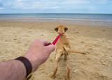 Trainer explains easy method to stop your dog pulling on leash