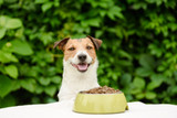 Feeding your dog a Premium Diet based on life stage