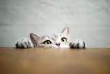 The secret to a happy indoor cat