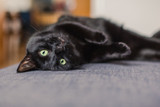 13 Reasons to Love Black Cats