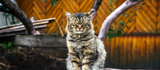Care guide for your senior cat