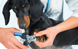 Your go to guide for trimming a dog's nails at home