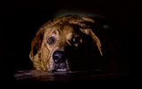 5 common items that may terrify your dog