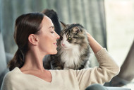 """The myth of """"Hypoallergenic Cats"""""""