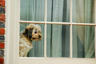 Trainer's top tips for dealing with Doggy separation anxiety in level 2