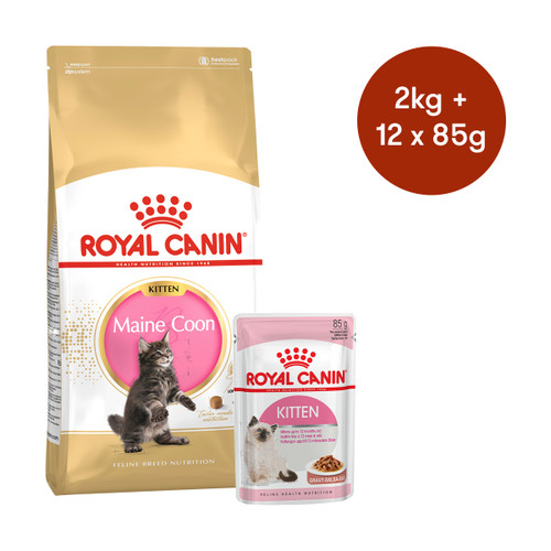 Royal Canin Maine Coon Kitten Dry + Wet Cat Food Bundle