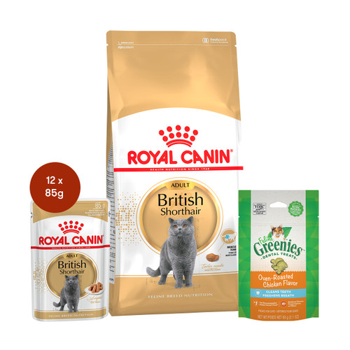 Royal Canin British Shorthair Adult Food & Treats Bundle