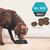 Pro Plan Adult Optirestore Sensitive Skin & Stomach Dry Dog Food