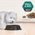Pro Plan Adult Small & Mini Breed Sensitive Skin & Coat Salmon Dry Dog Food