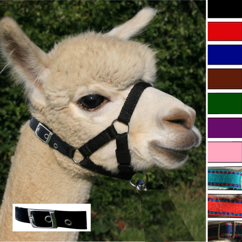Alpaca Headcollar Buckle Fastening Black