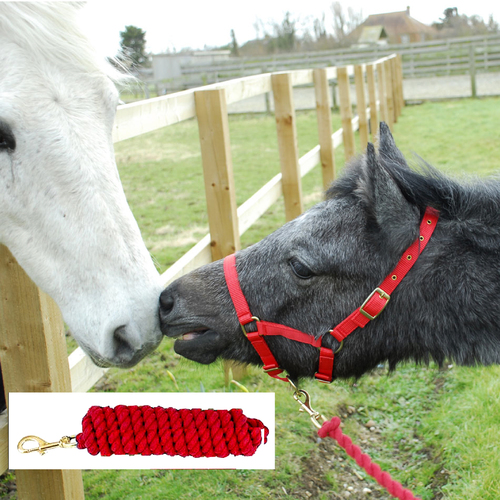 Rhinegold Nylon Foal Headcollar with Matching Lead Rope