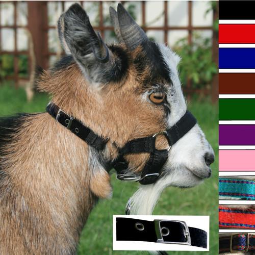 Goat Headcollar Buckle Fastening