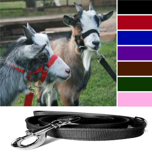 Goat Headcollar Buckle Fastening with Matching Lead