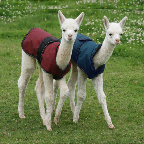Alpaca & Llama Coat with Under Chest Protection