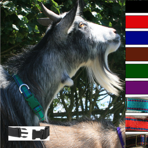 Goat Collar With Snap-Fastening