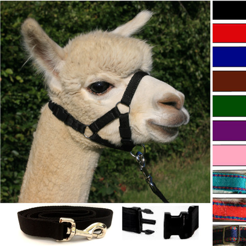 Alpaca Snap Fastening Headcollar - With Lead - SPECIAL OFFER