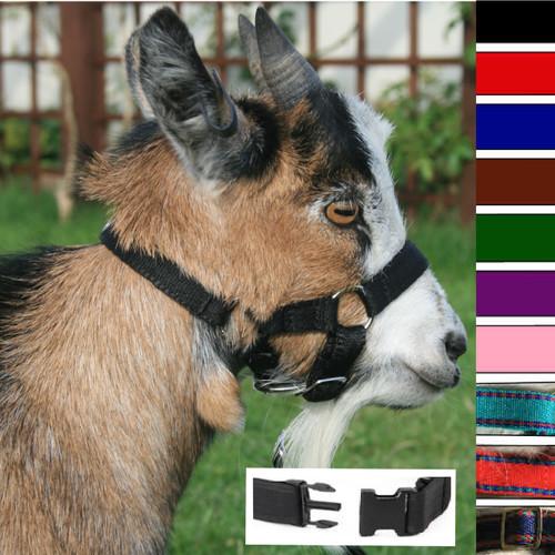 Goat Headcollar Snap Fastening