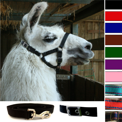 Llama Buckle Fastening Headcollar - With Lead - SPECIAL OFFER