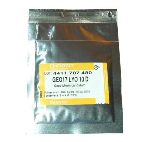 Geotrichum Candidum 10 DCU